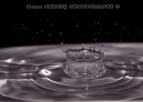 osmansezgic photographer macro (11)