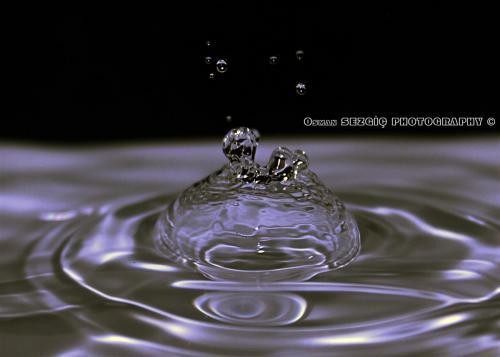 osmansezgic photographer macro (12)